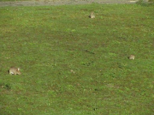 There were bunnies everywhere! Seen from our hotel window