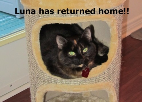 Luna is back! July 4