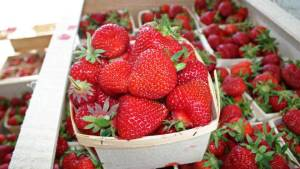 Photo Credit: http://thechronicleherald.ca/business/110845-a-berry-long-season