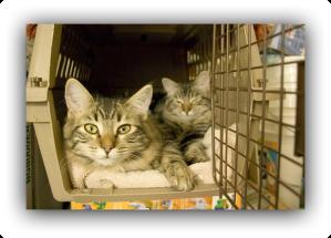Bon Voyage, kittehs! (Photo: thecatdoctorventura.com)