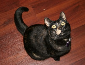 If you are not afraid of my black cat, you should be - she will bite and scratch!