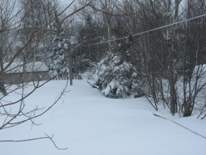 Snow over the fence (back yard)