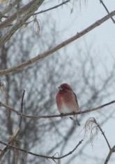 Bird Visitor