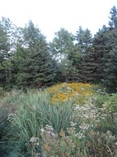 Cat-Tails, Goldenrod, Queen Anne's Lace