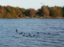 Earlier Fall with a few ducks