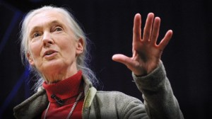 Jane Goodall (photo: TED.com)